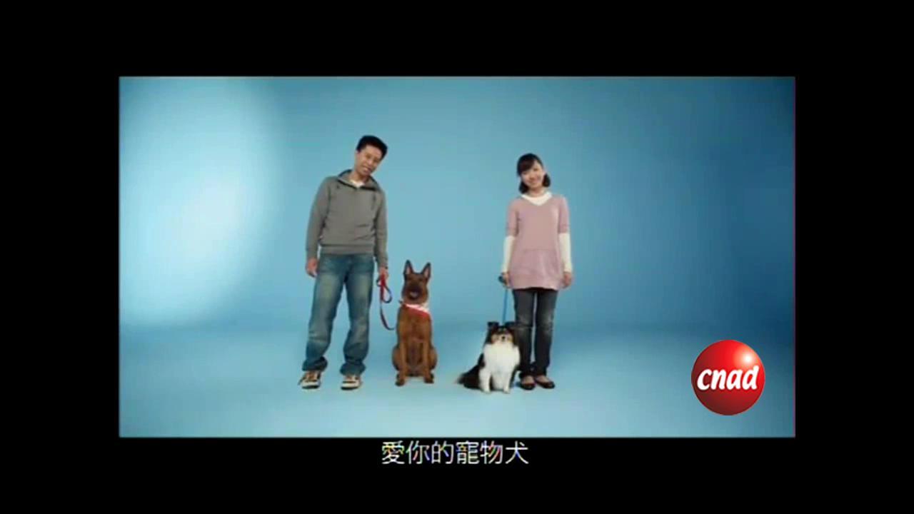 [宠物]寵物犬打針續牌